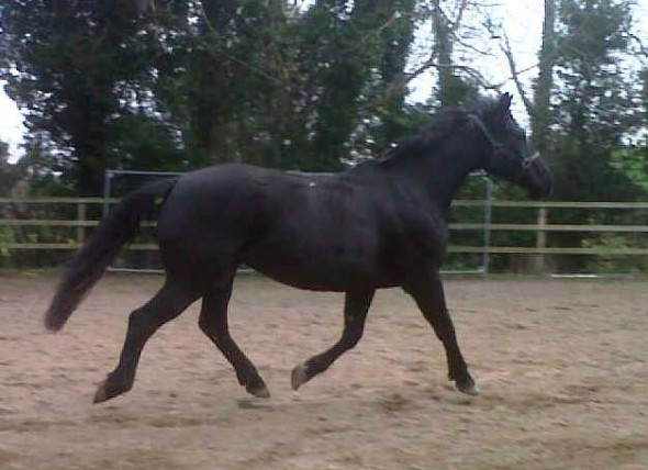 New mare in foal by Osmium
