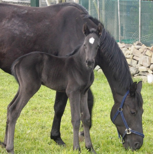 Samichel and filly foal