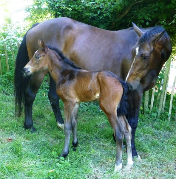 filly by Lancelot